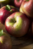 Raw Organic Red Mcintosh Apples. Ready for Eating Royalty Free Stock Photography