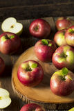 Raw Organic Red Mcintosh Apples. Ready for Eating Royalty Free Stock Images