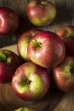 Raw Organic Red Mcintosh Apples. Ready for Eating Stock Image