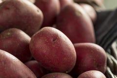 Raw Organic Red Potatoes Stock Photo