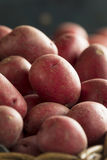 Raw Organic Red Potatoes Royalty Free Stock Photography
