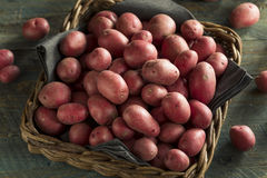 Raw Organic Red Potatoes Royalty Free Stock Photo