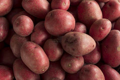 Raw Organic Red Potatoes Royalty Free Stock Photos