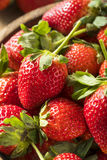 Raw Organic Red Ripe Strawberries Royalty Free Stock Photography
