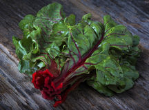 Raw Organic Red Ruby Swiss Chard Royalty Free Stock Photography