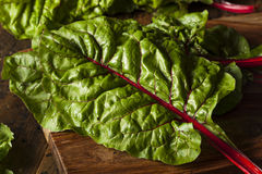 Raw Organic Red Swiss Chard Stock Photography