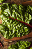 Raw Organic Red Swiss Chard Royalty Free Stock Images