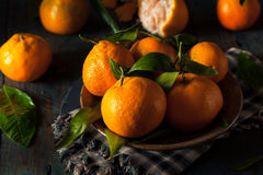 Raw Organic Satsuma Oranges. With Green Leaves Royalty Free Stock Photo