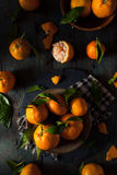 Raw Organic Satsuma Oranges. With Green Leaves Stock Photography