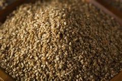Raw Organic Sesame Seeds Stock Photo