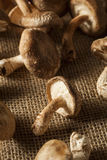 Raw Organic Shitaki Mushrooms Royalty Free Stock Image