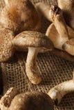Raw Organic Shitaki Mushrooms Royalty Free Stock Images