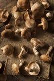 Raw Organic Shitaki Mushrooms Stock Photos