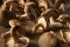 Raw Organic Shitaki Mushrooms Stock Photo