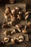 Raw Organic Shitaki Mushrooms. On a Background Stock Images