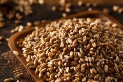 Raw Organic Spelt Grain Royalty Free Stock Image