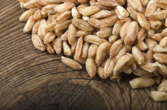 Raw Organic Spelt Grain Stock Photography
