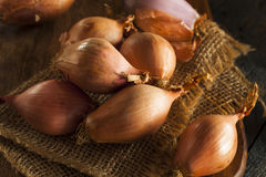 Raw Organic Spicy Shallots Royalty Free Stock Images