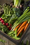 Raw Organic Spring Farmers Market Box. With Asparagus Broccoli Kale Snow Peas and Green Onions Stock Image
