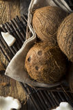 Raw Organic Tropical Brown Coconuts. Ready to Open Stock Images