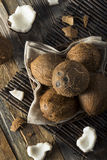 Raw Organic Tropical Brown Coconuts. Ready to Open Royalty Free Stock Images