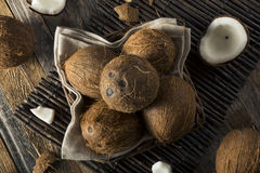 Raw Organic Tropical Brown Coconuts Stock Images