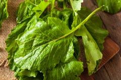 Raw Organic Turnip Greens Stock Images