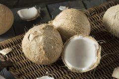 Raw Organic White Coconuts Royalty Free Stock Photo