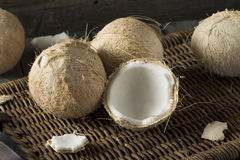 Raw Organic White Coconuts Royalty Free Stock Photos
