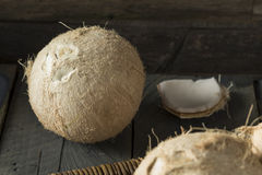 Raw Organic White Coconuts Stock Photography