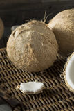 Raw Organic White Coconuts Royalty Free Stock Photography