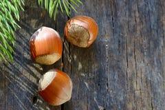 Raw Organic Whole Hazelnuts Stock Images