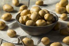 Raw Organic Yellow Baby Potatoes Stock Photography