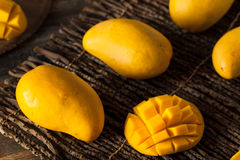 Raw Organic Yellow Mangos Stock Images