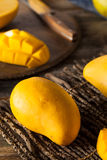 Raw Organic Yellow Mangos Royalty Free Stock Photo