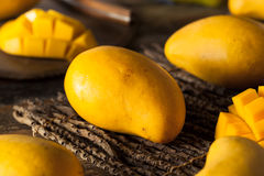 Raw Organic Yellow Mangos Stock Image