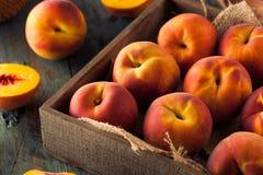 Raw Organic Yellow Peaches Royalty Free Stock Photos