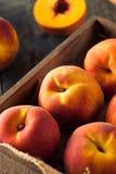 Raw Organic Yellow Peaches Stock Photography