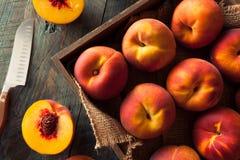 Raw Organic Yellow Peaches Royalty Free Stock Photography