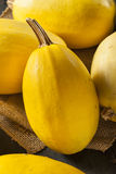 Raw Organic Yellow Spaghetti Squash Royalty Free Stock Photography