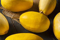 Raw Organic Yellow Spaghetti Squash Stock Images