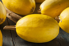 Raw Organic Yellow Spaghetti Squash Royalty Free Stock Photo