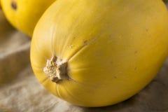 Raw Organic Yellow Spaghetti Winter Squash. Ready to Cook royalty free stock photo