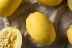 Raw Organic Yellow Spaghetti Winter Squash. Ready to Cook stock photography
