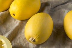 Raw Organic Yellow Spaghetti Winter Squash. Ready to Cook royalty free stock image