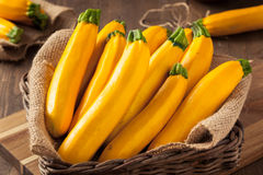 Raw Organic Yellow Zucchini Squash Royalty Free Stock Images