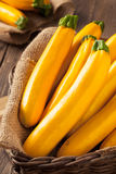 Raw Organic Yellow Zucchini Squash Royalty Free Stock Photos