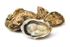 Raw oyster Royalty Free Stock Image