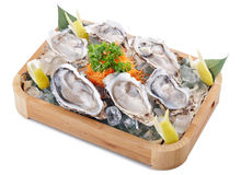 Raw oyster royalty free stock images