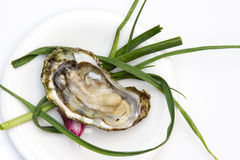 Raw Oyster. With green onion garnish Royalty Free Stock Photography
